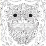 Adult Coloring Pages Owls Beautiful Photography Big Eyed Owl Adult Coloring Page Coloring Pages