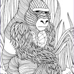 Adult Coloring Supplies Best Of Photos Gorilla Adult Colouring Page Colouring In Sheets Art
