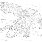 Alligator Coloring Sheet Awesome Photos Alligator Drawing Step By Step At Getdrawings