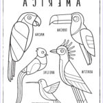 American Coloring Best Of Image Birds Of Latin America – Colouring Page