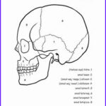 Anatomy And Physiology Coloring Book Best Of Photos 50 Anatomy And Physiology Coloring Pages Free Anatomy