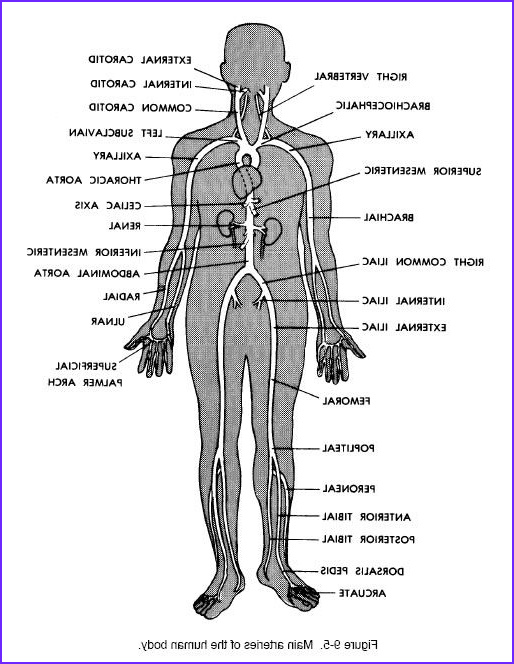 Anatomy and Physiology Coloring Workbook Answer Key Chapter 2 Beautiful Stock Chapter 9 the Endocrine System Anatomy and Physiology