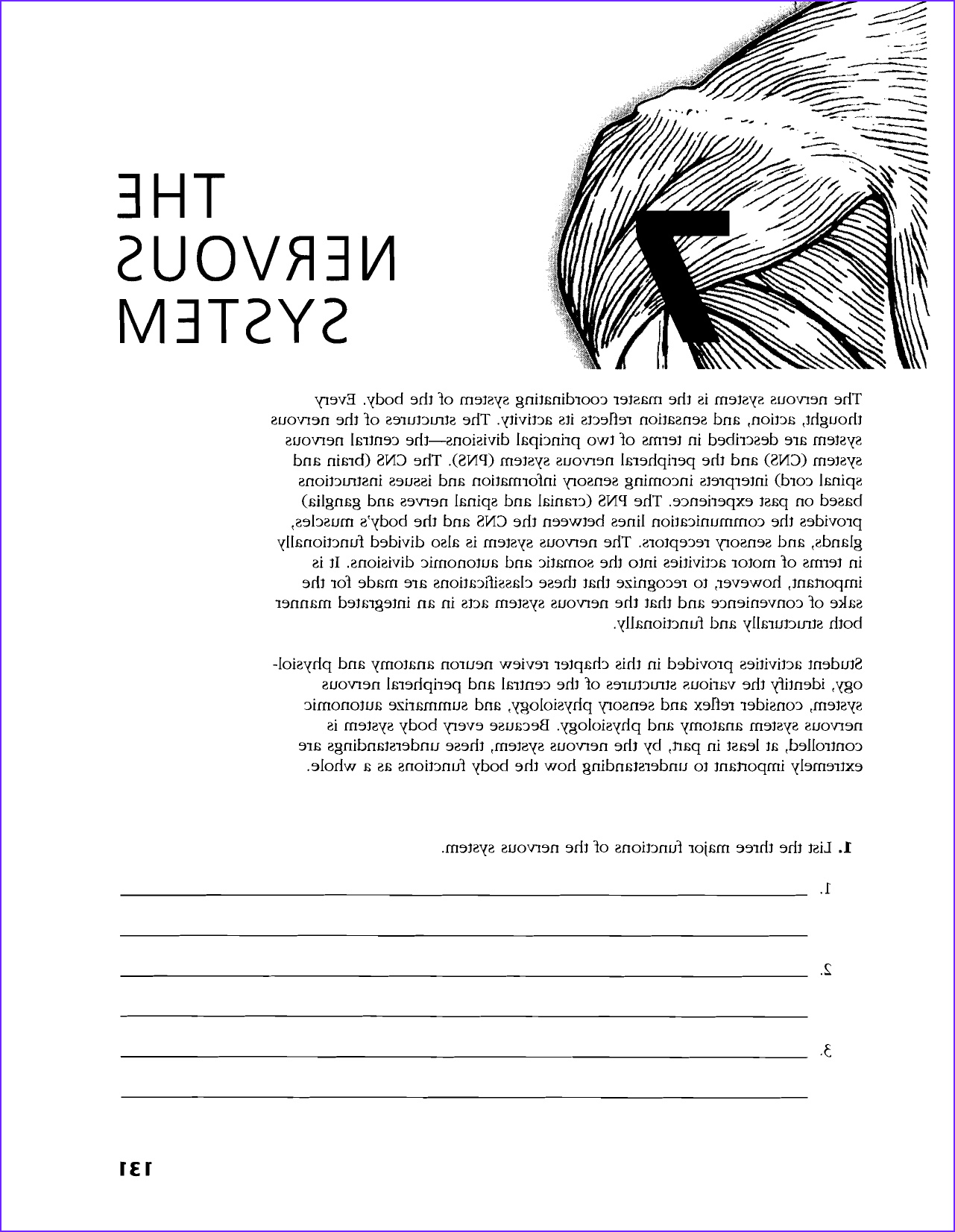 Anatomy and Physiology Coloring Workbook Answer Key Chapter 2 Unique Stock Anatomy and Physiology Coloring Workbook Chapter 7 the