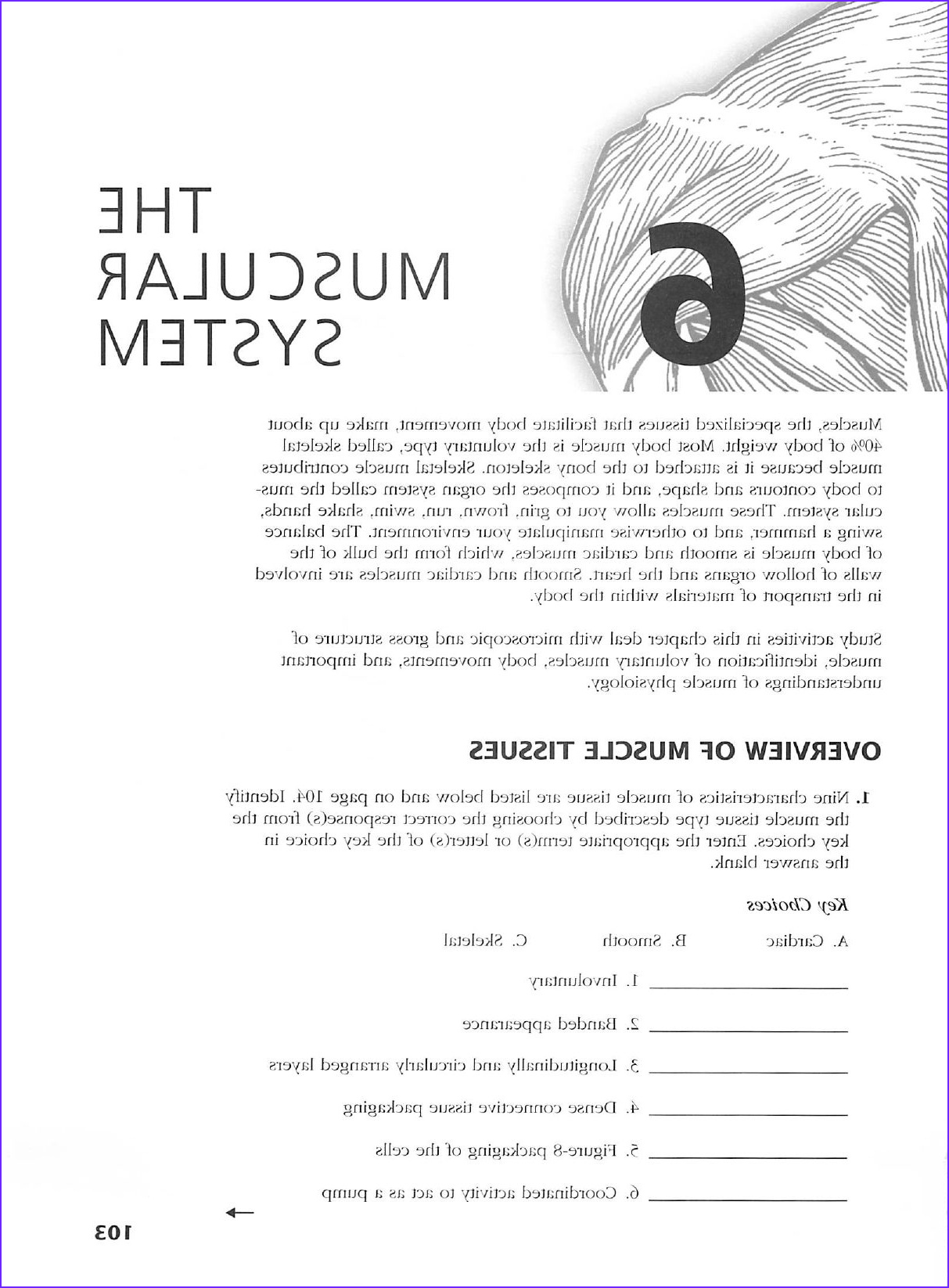 Anatomy and Physiology Coloring Workbook Answers Elegant Photos Anatomy and Physiology Coloring Workbook Answer Key Ch 8