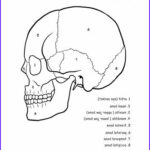 Anatomy Coloring Beautiful Gallery Pinterest • The World's Catalog Of Ideas