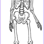 Anatomy Coloring Beautiful Photography Printable Skeleton Coloring Pages For Kids