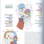 Anatomy Coloring Book Free Awesome Images What's Up With Your Face Anatomy Scans 1 0