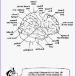 Anatomy Coloring Book Free Awesome Photos 9 Best A&p Coloring Pages Images On Pinterest
