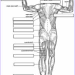 Anatomy Coloring Book Free Beautiful Collection Anatomy And Physiology Coloring Pages Free Image 30