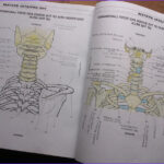 Anatomy Coloring Book Free Beautiful Gallery the Physiology Coloring Book Pdf Developersinfinite
