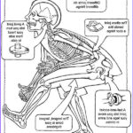 Anatomy Coloring Book Free Beautiful Photography Free Coloring Page From Dover Publications