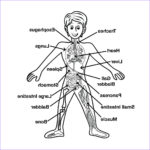 Anatomy Coloring Book Free Beautiful Photos Pin On Vbs Ideals