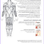 Anatomy Coloring Book Free Beautiful Stock The Anatomy Coloring Book