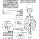 Anatomy Coloring Book Free Inspirational Images Anatomy Coloring Book Dover