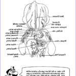 Anatomy Coloring Book Free Inspirational Photography Heart Anatomy Printable Coloring Pages Sketch Coloring Page