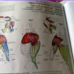 Anatomy Coloring Book Free New Images The Anatomy Coloring Book