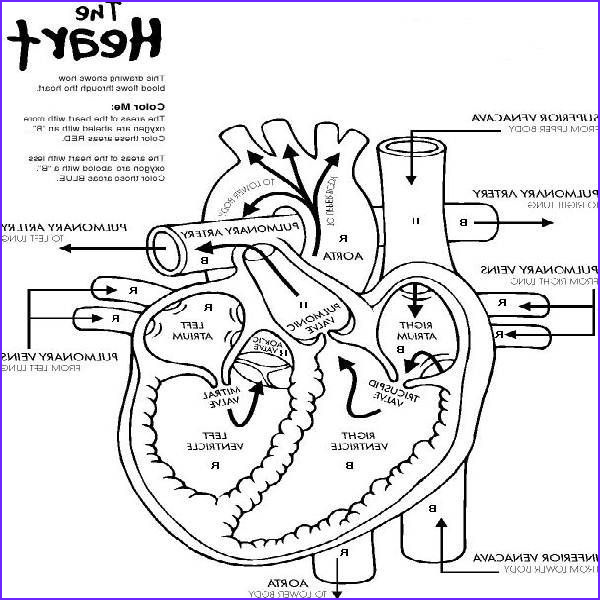 Anatomy Coloring Books Unique Images Heart Anatomy Printable Coloring Pages