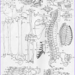Anatomy Coloring Cool Image 50 Anatomy And Physiology Coloring Pages Free Anatomy