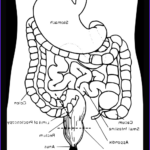 Anatomy Coloring Cool Images Anatomy Coloring Pages 2