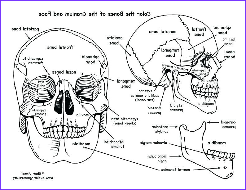 Anatomy Coloring Elegant Photos Human Anatomy Coloring Book 41 and Skull Coloring Pages