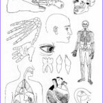 Anatomy Coloring Inspirational Image Anatomy Coloring Pages Printable