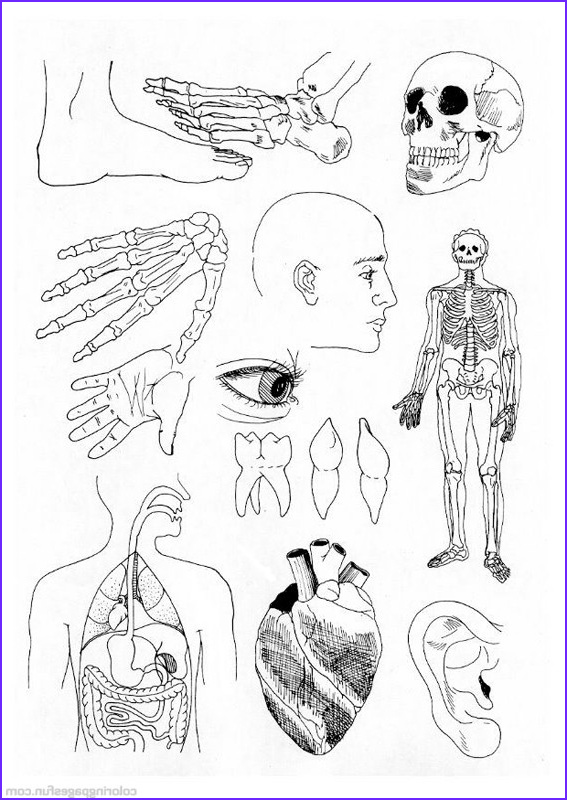 anatomy coloring pages printable