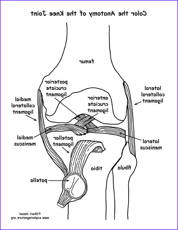 Anatomy Coloring Luxury Collection Image Result for Free Human Anatomy Coloring Pages Pdf