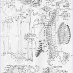 Anatomy Coloring Luxury Photos 50 Anatomy And Physiology Coloring Pages Free Anatomy And