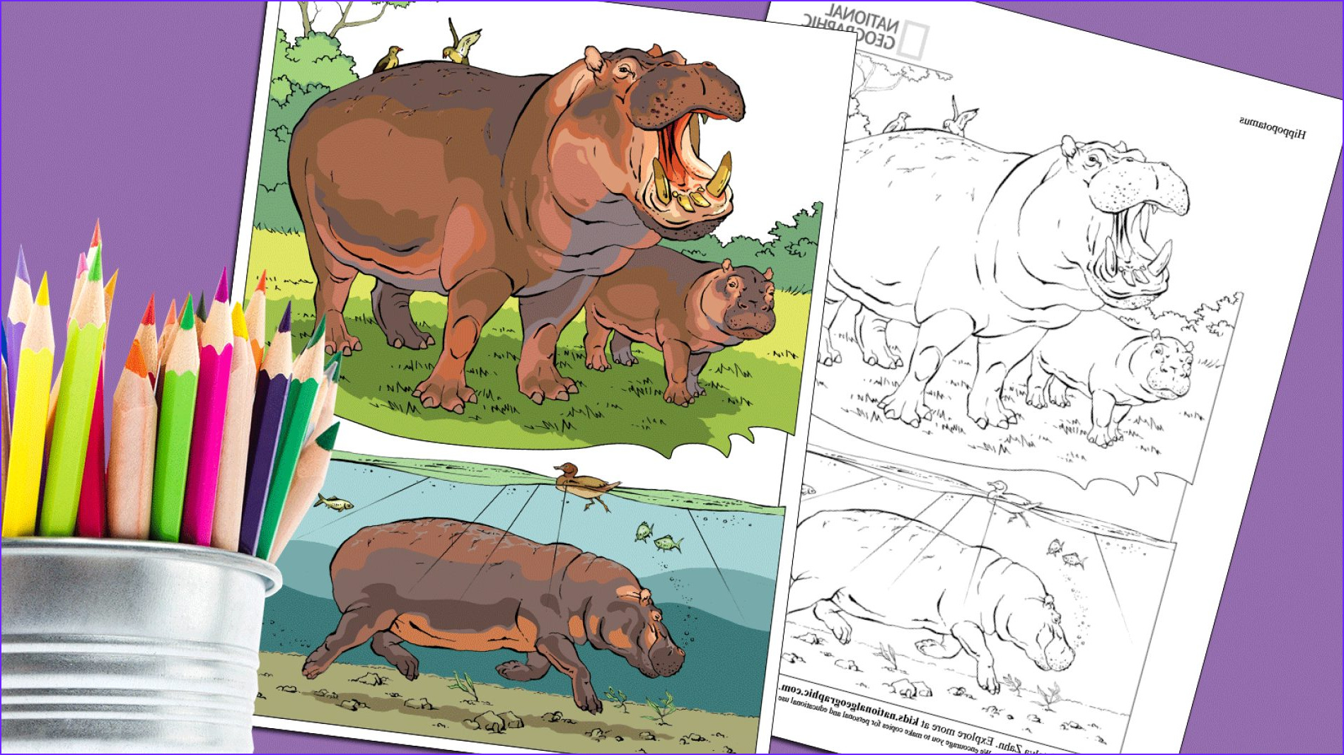 coloring book animals j to z