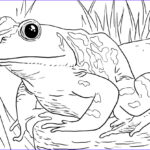 Animals Coloring Page Best Of Photos Zoo Animals Coloring Pages Best Coloring Pages For Kids