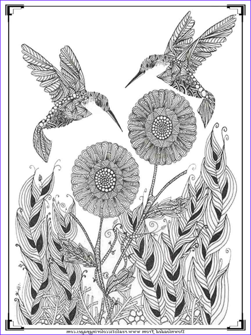 Art therapy Coloring Book Inspirational Stock Printable Birds Coloring Pages for Adults