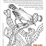 Az Coloring Pages Awesome Photos Arizona State Bird Cactus Wren Coloring Page