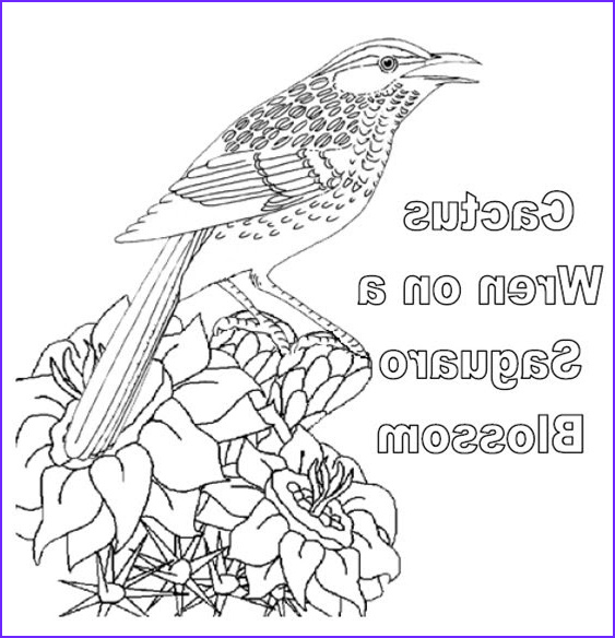 Az Coloring Pages New Gallery Coloring & Activity Pages Cactus Wren On A Saguaro