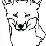 Baby Fox Coloring Page Best Of Stock Red Fox Drawing At Getdrawings