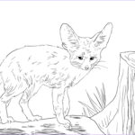 Baby Fox Coloring Page Inspirational Photography North African Fennec Fox Coloring Page