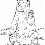 Bear Coloring Pages Best Of Photos Coloring Pages Archives Page 3 Of 7 Samantha Bell