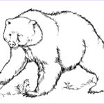 Bear Coloring Pages Cool Image Free Printable Bear Coloring Pages For Kids