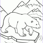 Bear Coloring Pages Inspirational Image 20 Free Printable Polar Bear Coloring Pages