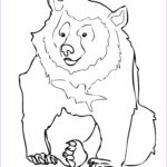 Bear Coloring Pages Luxury Collection Free Printable Bear Coloring Pages For Kids