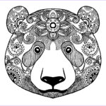 Bear Coloring Pages Luxury Photos Bear 2 Bears Adult Coloring Pages