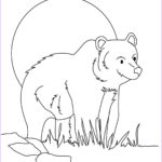 Bear Coloring Pages Luxury Stock Bear Coloring Pages Realistic
