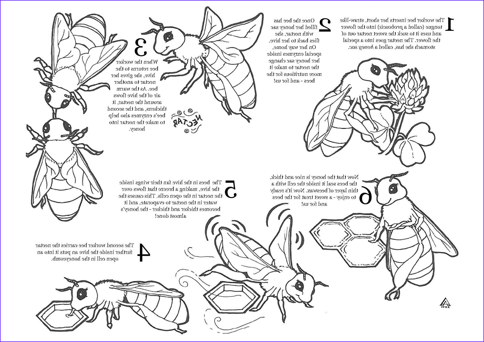 Bee Coloring Pages Awesome Photography the Honey Bee