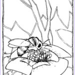 Bee Coloring Sheet Inspirational Gallery 60 Best Images About Bee Coloring Pages On Pinterest