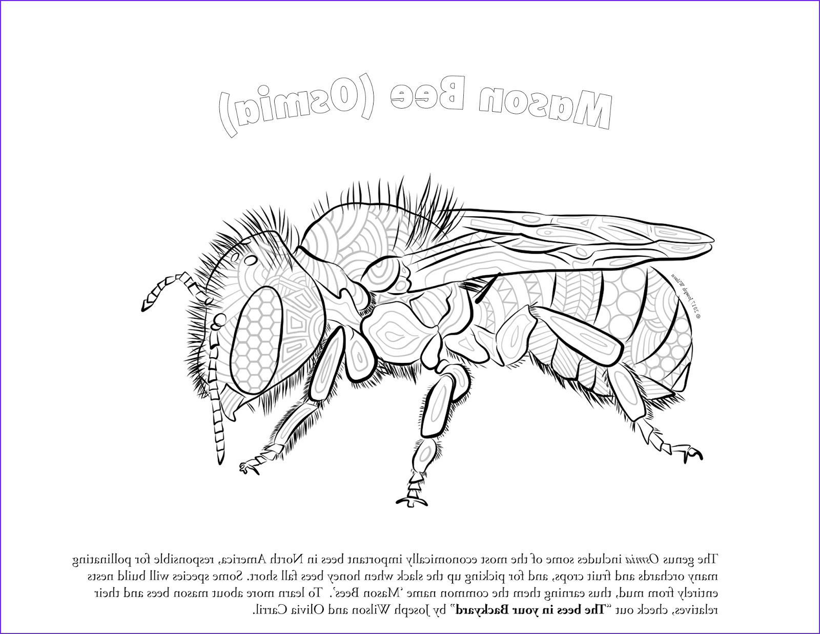 Bees Coloring Pages Beautiful Photos Bees In Your Backyard Native Bee Coloring Page