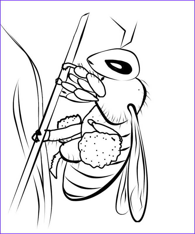 Bees Coloring Pages Inspirational Gallery Free Printable Bee Coloring Pages for Kids