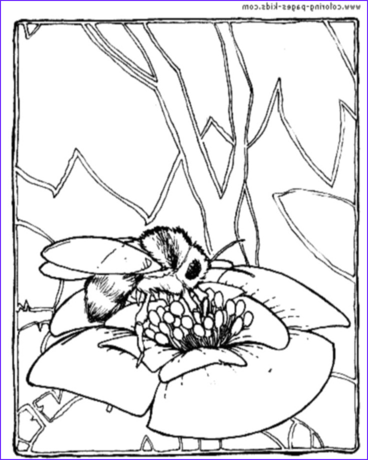 Bees Coloring Pages Inspirational Photography 60 Best Images About Bee Coloring Pages On Pinterest
