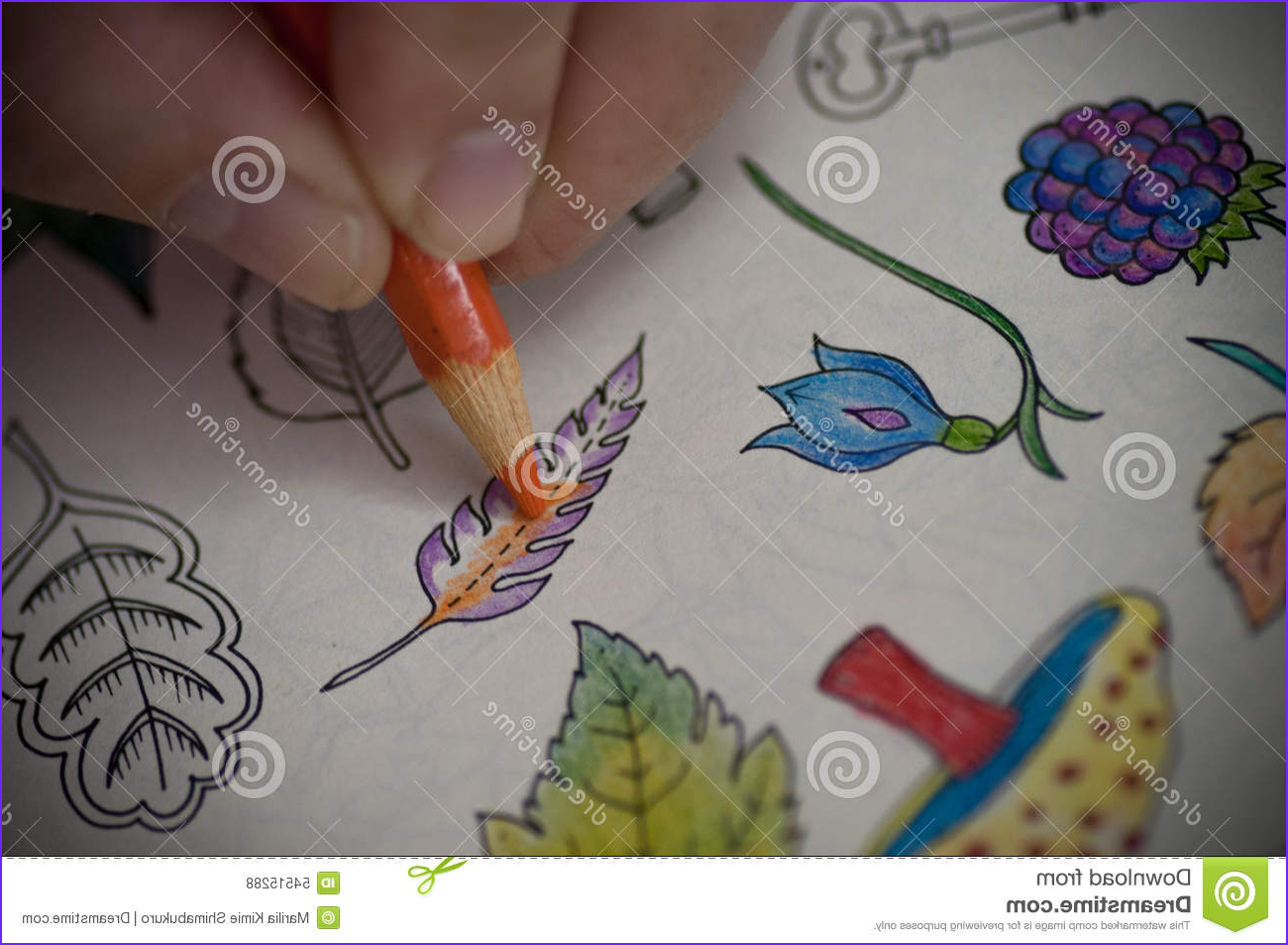 Best Pencils for Adult Coloring Books Awesome Photos Coloring Book Stock Image