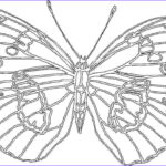 Big Coloring Pages Beautiful Photography Big Butterfly Coloring Page For Kids Printable