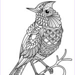 Bird Coloring Pages Best Of Collection Free Book Bird Birds Adult Coloring Pages