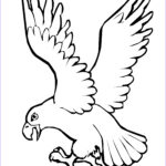 Bird Coloring Pages Cool Stock Bird Coloring Pages